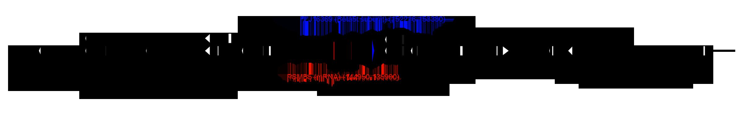 Human chromosome 14