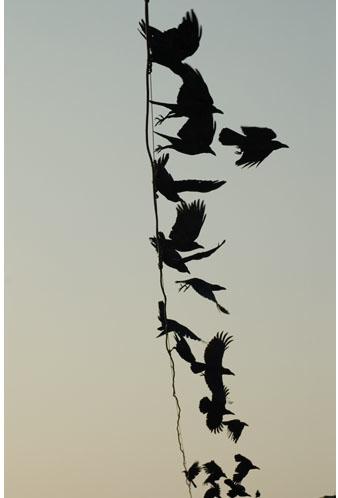 Meggan Gould, Crow 104