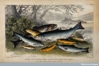 Diversity in fish: From Wellcome Images