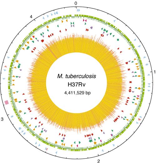 Mtb genome