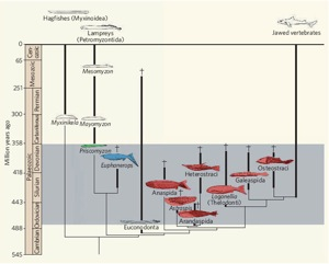 Lamprey phylogenetic tree