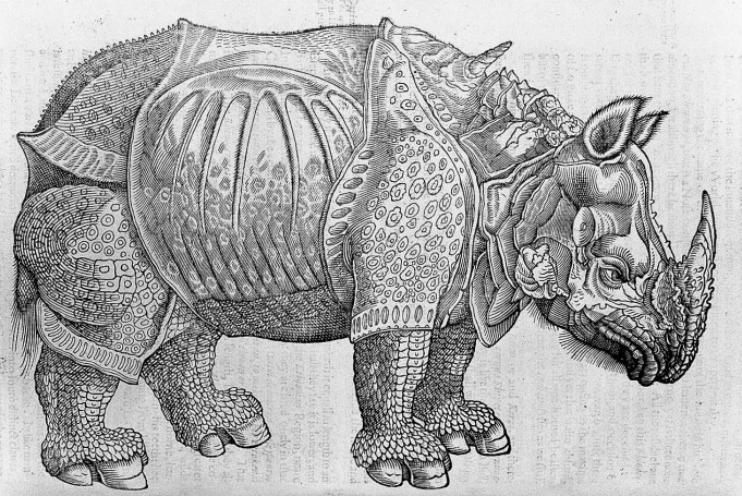 Evolution Of Rhinoceros