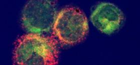 Intracellular cytokine ctaining