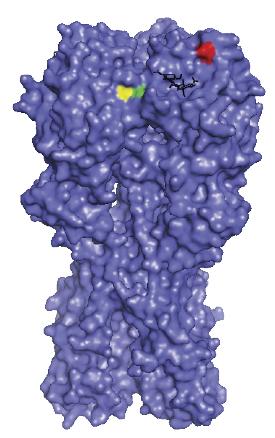 Hemagglutinin (HA) crystal structure