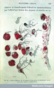 Metchnikov - Lecons sur la pathologie