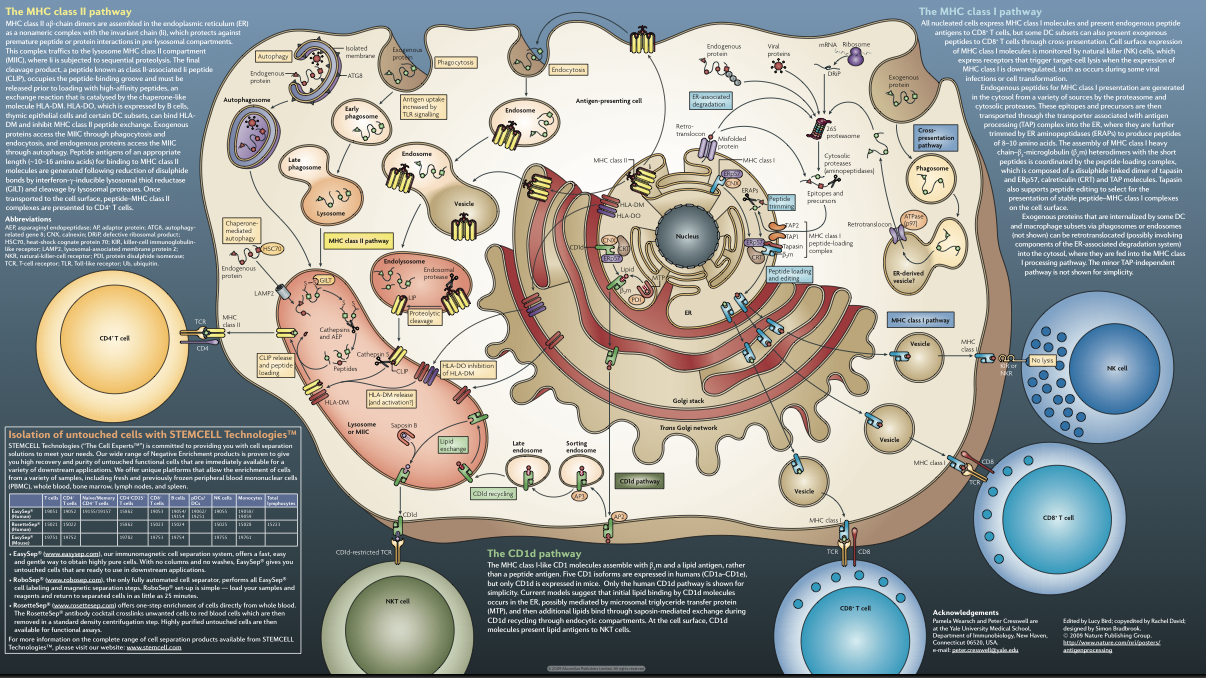 Nature Reviews Immunology Antigen Processing poster