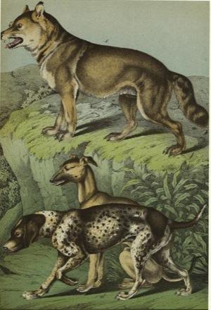 Dogs & Wolf (Gotthilf Heinrich von Schubert)
