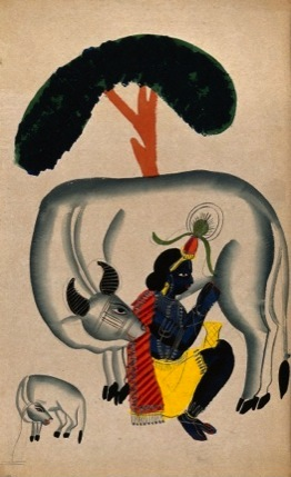 Krishna milking a cow