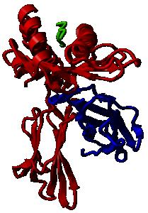 HLA-A2 complex