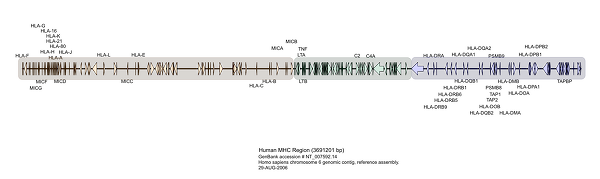 HLA Genomic - XPlasMap
